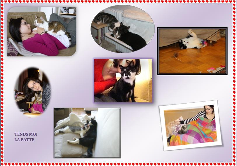 Témoignage de Mathilde, famille d'accueil pour chats T-mpignage-mathilde-43f4f36